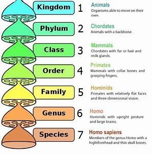 classification of animals kingdom phylum - Google Search ...  Phylum
