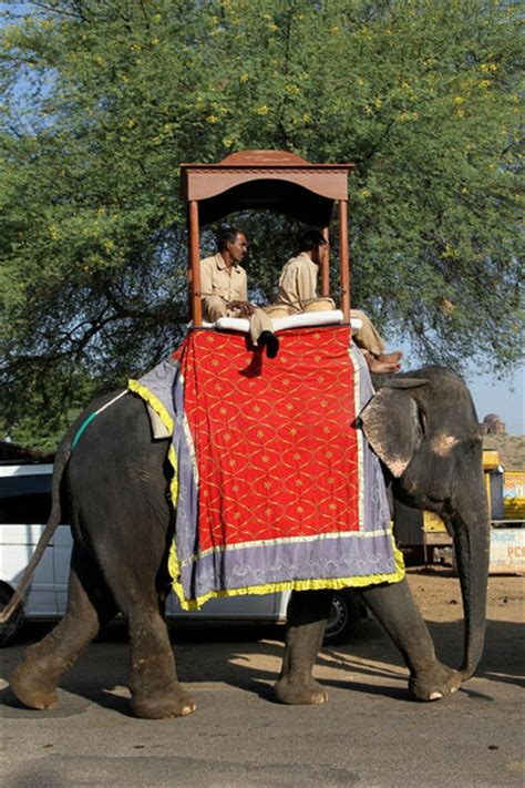 russell brand elephant katy perry and russell brand wedding elephants zimbio