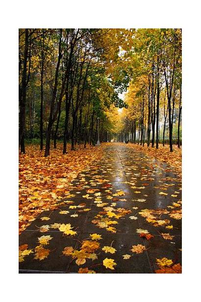Autumn Leaves Fall Happy Blowing Wind Animated