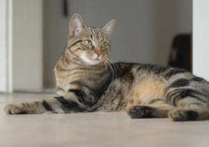 wie oft urinieren katzen  tag marktde