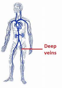 Why Is Deep Vein Thrombosis Dangerous   U2013 Osteopathy Singapore