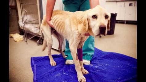 baileys story animal welfare leagues inspector rescue