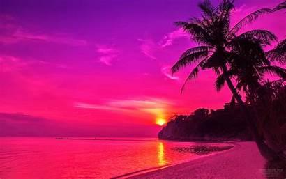 Sunset Desktop Wallpapers Tree Purple 1600 Tropical