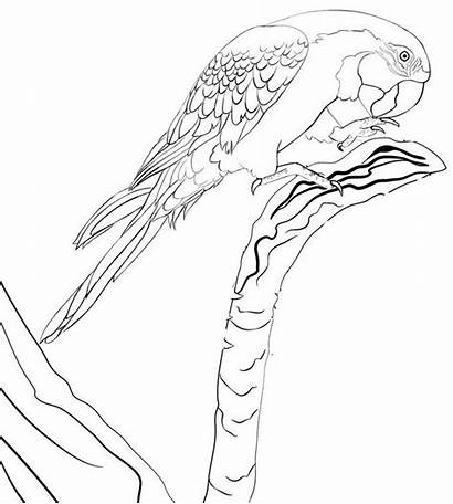 Coloring Macaw Wonderful Zoo Pages Bird