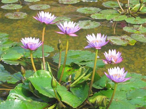 water plants water plants