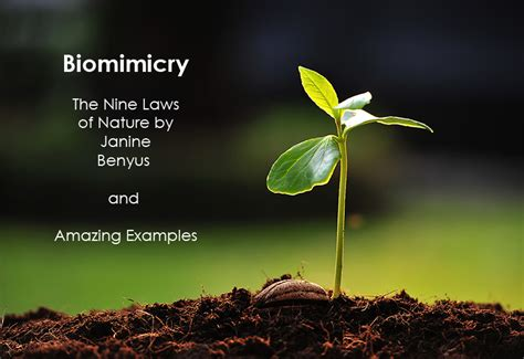 biomimicry  laws  nature  examples gallery