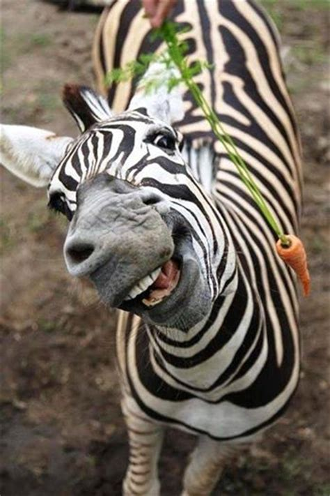 funniest laughing animal pictures