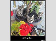 Frühlings Cats Lustige Bilder, Sprüche, Witze, echt lustig
