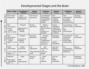 Developmental Stages And The Brain