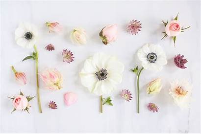 Floral Desktop Wallpapers Backgrounds Background Computer Pixelstalk