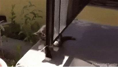 Gifs Cat Animals Funny Falling Cats Trending