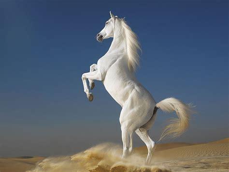 horses horse mythology stallion unicorn rainbow lord most horn wolf hourse arabian background warrior wildlife those caballo caballos fotos hermosos