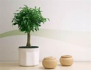 exceptionnel plante verte chambre a coucher 5 salle With plante verte dans une chambre a coucher