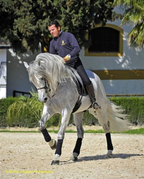 andalusian horse horses dressage breeds breed riding andalusians training human tail localriding strong huggan equestrian