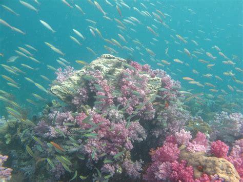 Ko Lipe Diving Photo Gallery Marine Life