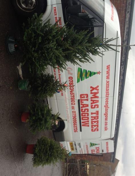 real christmas trees glasgow trees glasgow real christmas trees glasgow 4259