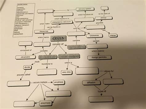 cell concept map worksheet answer key  worksheet