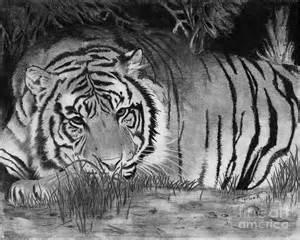 Spiritual Tiger Drawing