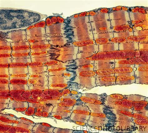 images  medpict  pinterest blood cells