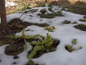 Garten Im März : der garten im m rz garten weden blog ~ Lizthompson.info Haus und Dekorationen