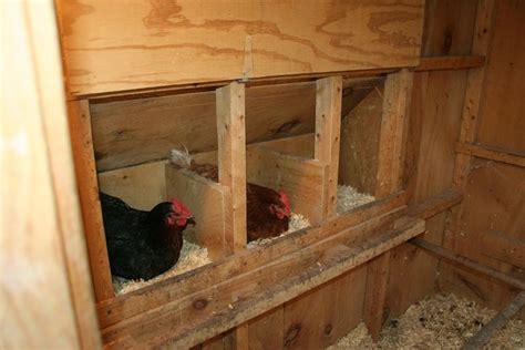 chicken coop interior nest boxes chicken coop ideas