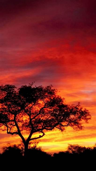 Africa Sunset Iphone Wallpapers 1080p Sunrise African