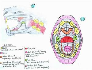Monster Worm Oral Cavity Diagram By Autumndragon1172 On Deviantart