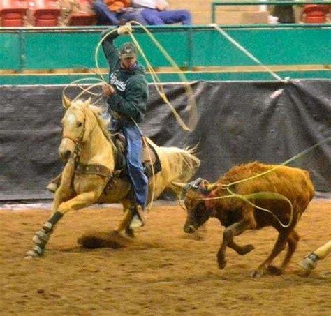 mc horses equinenow
