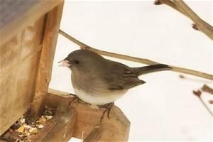 Vögel Füttern Ab Wann : vogelf tterung ab wann so helfen sie den tieren wirklich ~ Frokenaadalensverden.com Haus und Dekorationen