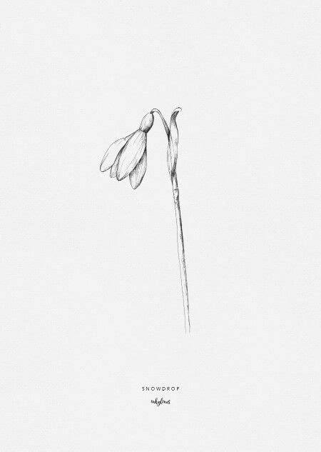 Snowdrop in 2019 | Flowers | Art drawings, Floral drawing, Flower tattoos