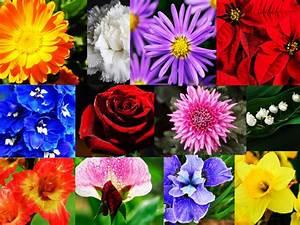 Liebe Ist Wie Eine Blume : was die blume deines geburtsmonats ber dich verr t wunderweib ~ Whattoseeinmadrid.com Haus und Dekorationen