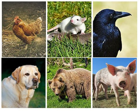 rs for dogs characteristics of herbivores carnivores and omnivores