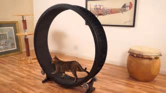 cat exercise wheel cat exercise wheel kickstarter
