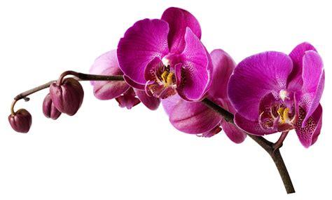 stickers pour cuisine stickers orchidée pas cher