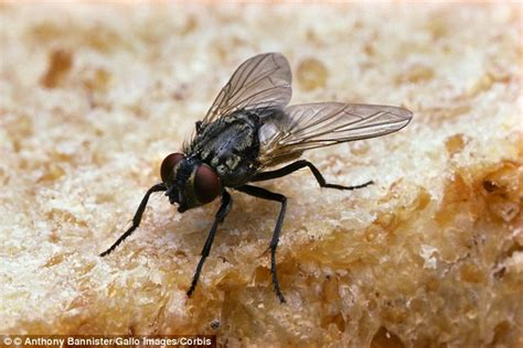 Should You Throw Away Food If A Fly Lands On It? Daily
