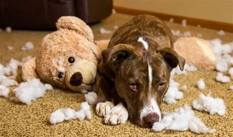 Whether dogs and cats reside in new jersey or come to visit the garden state, they have to follow the new jersey pet laws and statues. Homeowners Insurance Dog Breed Restrictions