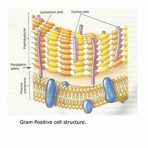Sharemicro  Different Cell Wall Structure