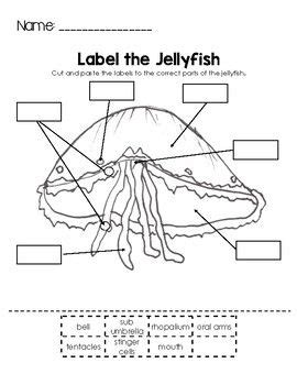 label the jellyfish night of the moonjellies school