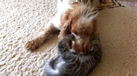baby cat biting big dog muzzle dog  kitty youtube