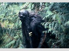 Differentiating Bigfoot, Yeti, Skunk Ape, Wildman and