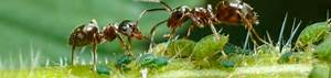 Mittel Gegen Ameisen : ameisen mittel gegen ameisen ~ Buech-reservation.com Haus und Dekorationen