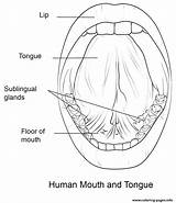 Coloring Mouth Tongue Human Printable sketch template