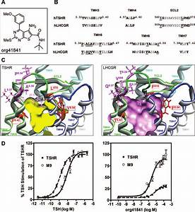 Differences In The Proposed Lmw Ligand
