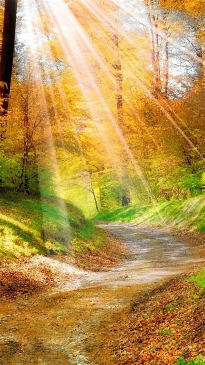 Nature Iphone Sunlight Wallpapers Scenery Autumn A4