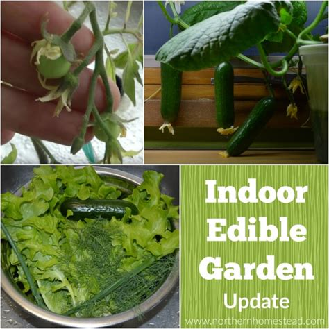 indoor edible garden update northern homestead