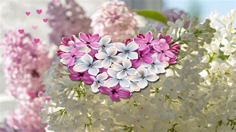 Ziedošais pavasaris. - YouTube