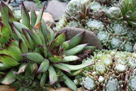 Garten Pflanzen Forum by Pflanzen F 252 R Nordseite Pflanzen F R Nordseite Pflanzen