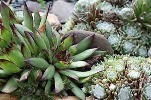 Pflanzen Für Schattengarten : pflanzen f r den steingarten native plants ~ Sanjose-hotels-ca.com Haus und Dekorationen