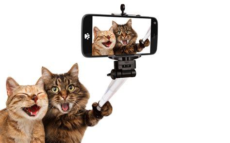 laughing animals cat pet selfies smartphone selfie