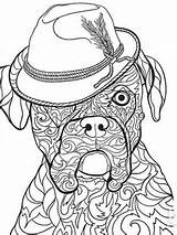 Coloring Boxer Dog Puppy Dogs Adult Bhg sketch template